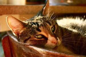 Gemütlich liegende Katze