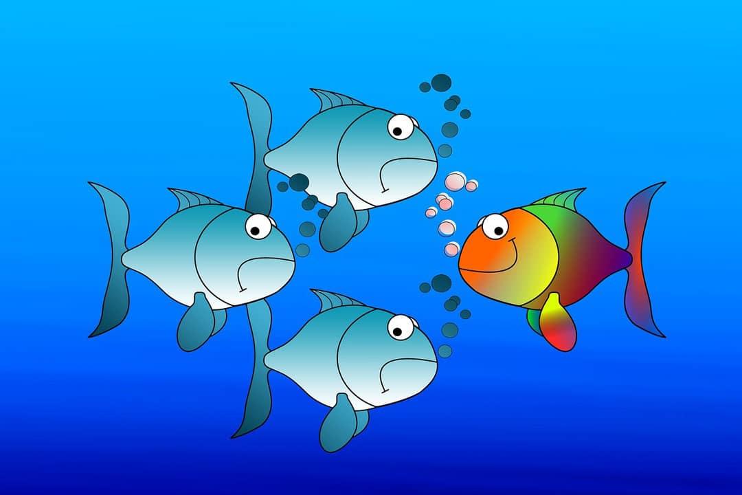 Fische - Nutzerfreundlichkeit und Aktualität