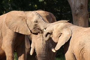 Drei Elefanten - Responsive Webdesign