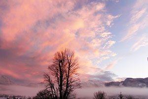 Marketing-Mix, Marketingstrategie, Online-Marketing, Werbung - Abendstimmmung, rosa Wolken mit Baum
